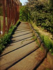 (my.third.eye) Tags: sanfrancisco plants nature rust fences foliage urbannature paths