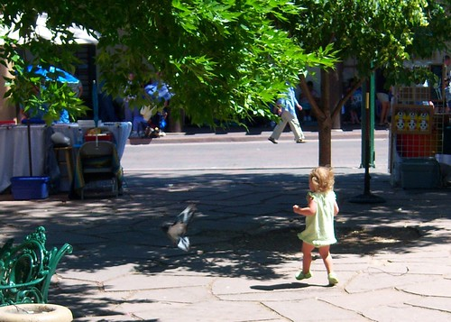 Chasing Pidgeons