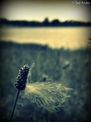 Catching the Breeze (ted @ndes) Tags: park lake water grass pond dof bokeh kentucky ky louisville dxpro longrun theartistseyes yourphototips