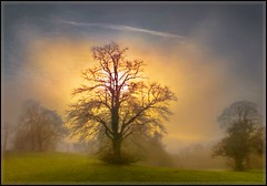My winters dream! (adrians_art) Tags: morning trees winter sky mist misty fog landscapes bravo shadows seasons foggy silhouettes outstandingshots bratanesque goldenvisions