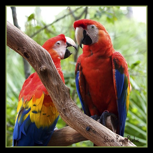 Macaws #2