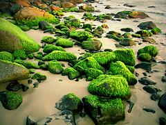 hairy rocks (Andr Lui Bernardo) Tags: ocean hairy green beach brasil sand rocks shore santacatarina garopaba alga andrbernardo praiadaferrugem andrbernardo wwwandrebernardocom