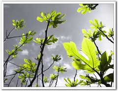 ..Sky is not enough high! (Martjusha) Tags: sky verde green nature leaves foglie cielo grn supershot golddragon anawesomeshot colorphotoaward theunforgettablepictures goldstaraward