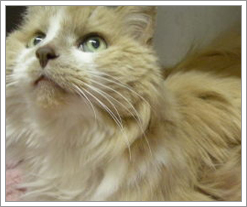 Harmoney from Almost Home Animal Shelter on the Quicken Loans Blog by whatsthediffblog, on Flickr