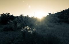 Anza Borrego Desert-10