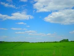 Fields of green .... Skies of blue ... (pantherinia_hd Anna A.) Tags: trip travel blue vacation sky green nature beauty field clouds landscape denmark scenery europe serenity plantation destination billund 5photosaday flickrlovers artofimages bestcapturesaoi