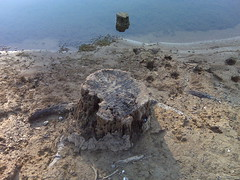 A stump on the shoreline (Clevergrrl) Tags: georgia mud stuck augusta quicksand clarkshill thurmondlake