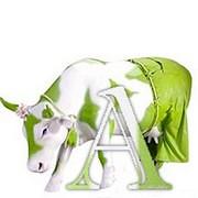 Une vache dans ma cuisine