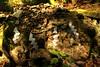 Rock and Rope : Nikko - Japan (kurokojpn) Tags: autumn nature japan tokyo orlando 日本 東京 nikko hdr kuroko canon40d photosjapan kuroko01 日本 東京 kurokoshiroko photographytokyo photostokyo bestoftokyo tokyobest orlandojpn thetokyopost kurokojpn