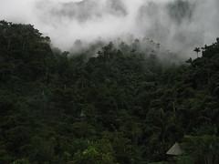 mist-wall