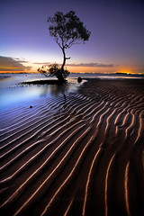 Everyones Tree (Garry - www.visionandimagination.com) Tags: sunset seascape reflection tree nature landscape photography sand bravo flickr glow dusk oz contest scenic photographers australia wideangle brisbane mangrove lee queensland getty bayside 5d ripples aus gettyimages gmt stockphotography photoqueen moretonbay bostoncom blueribbonwinner opl kartpostal the4elements abigfave specialtouch colorphotoaward erobin infinestyle treesubject ef1635mmf28liiusm theunforgettablepictures overtheexcellence theperfectphotographer ostrellina multimegashot july2009 alemdagqualityonlyclub visionandimagination cffaa themonalisasmile obramaestra wwwvisionandimaginationcom