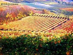 vigneto (archgionni) Tags: italy panorama nature landscape italia colours wine country natura campagna piemonte vineyards colori vino langhe vigneti