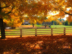 Ahhhhh, Autumn !!! (ddk4runner) Tags: autumn copyright tree fall nature rural fence landscape golden maple farm newengland allrightsreserved ddk4runner colorphotoaward flickrlovers donnakerley donnakerley ddkstudio ddk4runner