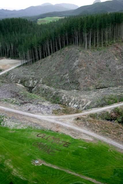 tokoroa deforestation