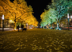 Festival of Lights - Unter den Linden - Berlin, Germany (Xindaan) Tags: city longexposure trees light fab tree berlin night germany geotagged deutschland licht nikon angle nacht linden unterdenlinden wide tokina festivaloflight stadt 2008 bume mitte ultra soe festivaloflights baum 116 manfrotto nachtaufnahme d300 berlinmitte uwa nightimage 1116 supershot abigfave 055mf4 anawesomeshot ultimateshot theunforgettablepictures 1116mm overtheexcellence goldstaraward rubyphotographer damniwishidtakenthat 1116mmf28 goldenheartaward 466mg 281116