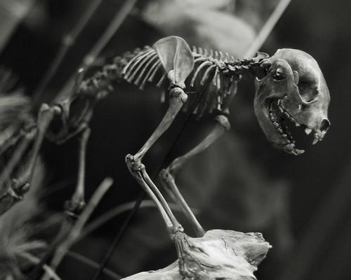 v gray fossil site 109