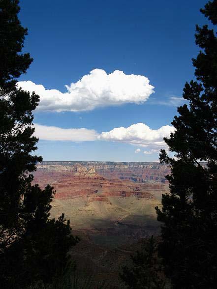 兩樹間望出的大峽谷.JPG
