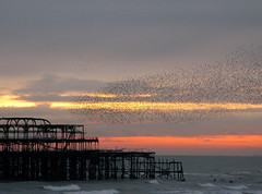 brighton, november sunset (venetia 27) Tags: sunset sea brighton waves westpier starlings murmuration tensofthousands
