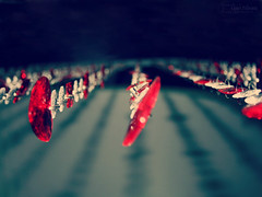 The endless path of love.. (Crazy Princess) Tags: red black love hearts heart crystal bokeh path explore endless the explored crazyprincess