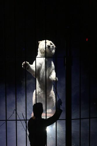 Cirque Bouglione au cirque d'hiver paris XI ème.