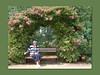 Rosenschau Steinfurt (Martin Volpert) Tags: flower fleur rose deutschland hessen flor pflanze rosa blumen roos blomma rosen gül blume fiore blüte blomst rós rozen virág lore bloem steinfurt friedberg blóm çiçek floro roser kwiat flos ciuri kvet arrosa kukka rozes cvijet vrtnica flouer bláth cvet zieds ruusut õis trandafir floare róza ruža rózsa blome rozo žiedas rosenschau rože ruže mavo43 rosenschausteinfurt rossläktet