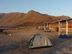 028-dia05-taltal (Spiniflores) Tags: camping antofagasta taltal