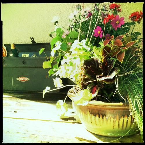 more photos of my garden table