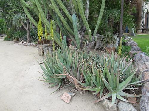 Aloe vera form