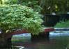 Jardin bonz (alpha du centaure) Tags: macro architecture de photos picture images bambou dmc photographe cévennes visuels photosofart lumixpanasonic naturalphotos dmcfz18 alphaducentaure photosartistique stephanemarechal photosdenature photosdart photosartistic fz38panasonicphotographeranduzebambouseraiebambouasieasiatiqueforêtforêt
