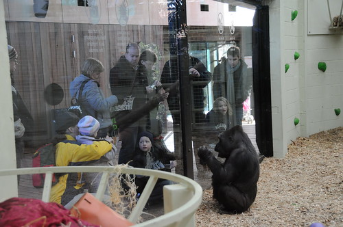 Gorilla_+_crowd_@_London_Zoo