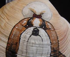closeup of Shih Tzu