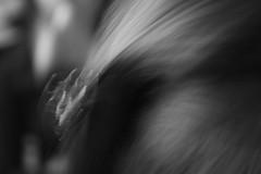 (Michin) Tags: hair anamara