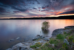 Tyrifjorden Spring Floods II (Anders Hagen-Nsset) Tags: sunset lake reflection norway canon landscape spring wideangle nordic scandinavia lonetree waterscape greengrass northerneurope diagonallines canoneos5d ef1740l springfloods