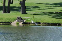 DSC_0872 (rich.reierson@verizon.net) Tags: golf papyrus 2008 isis
