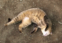 Shrine Cat's Shrine Dance (double figure) Tags: cat dance shrine dances catnipaddicts