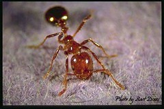 5 Problems Fire Ants Cause Homeowners | Pest Control San Antonio