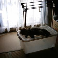 【写真】ミニデジで撮影した室内(和室と猫)
