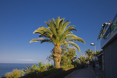 Palm :-) (michaelgrohe) Tags: ocean vacation costa holiday beach island coast kanaren canarias palm atlantic tenerife teneriffa inseln adeje