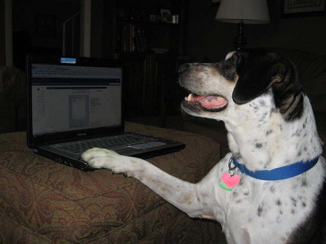 dog using a computer Internet