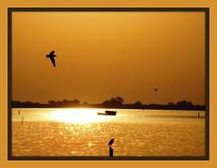 Por do Sol ... (sergio boeira) Tags: pordosol sun sol sunrise dawn golden dusk dourado uc 1001nights amanhecer anoitecer entardecer nascerdosol forofthesun anawesomeshot amazingamateur overtheexcellence proudshopper damniwishidtakenthat goldenheartaward