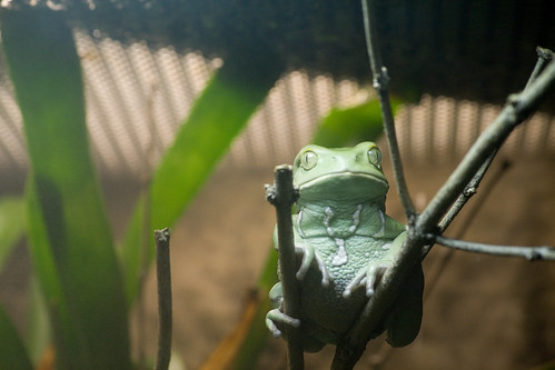 Frog Chillaxin' At The Baltimore Aquarium