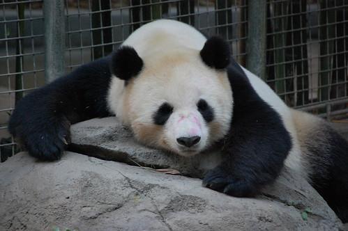 zoo 221