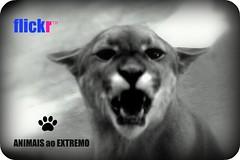 animaisaoextremo....
