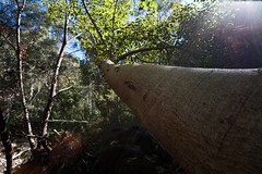 Karijini Park (C) 2008