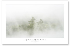 Mystical Mist (Imapix) Tags: trees white mist canada art nature fog pine forest canon photography photo bravo pin foto photographie searchthebest image quebec dream reserve qubec wilderness tremblant brouillard brume whiteness imapix gaetanbourque aplusphoto infinestyle vosplusbellesphotos imapixphotography gatanbourquephotography