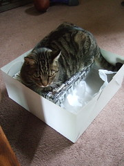 Butters on Box within Box