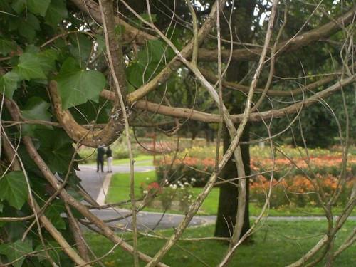 Ireland - Tralee rose garden
