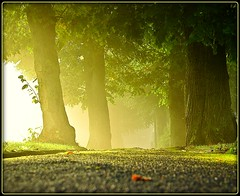 Herbst - autumn (NPP-publik_oberberg) Tags: morning autumn sun mist tree art fall fog sunrise germany magic creative cologne ground mystical dust oberberg allee outstandingshots platinumphoto topofthefog theunforgettablepictures platinumsuperstar thesuperstarthebest superstarthebest