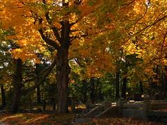 Historic Cemetery (jbmikmaq) Tags: bec bej fineartphotos abigfave saveearth goldstaraward