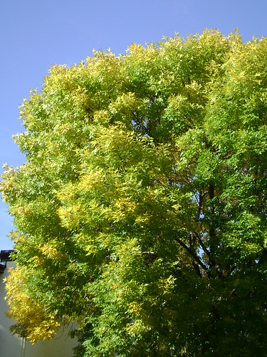 green and yellow tree